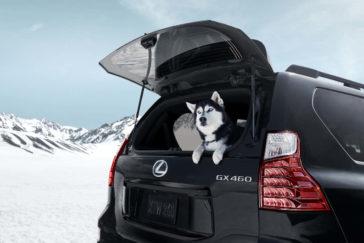 Lexus GX 2022 года