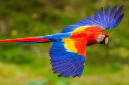 natura-costa-rica