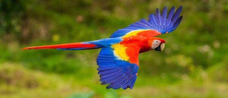 Интересные факты о Коста-Рике